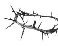 Crown of thorns. Isolated on white stock photography