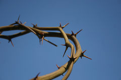 Crown of Thorns. Against clear blue sky royalty free stock image