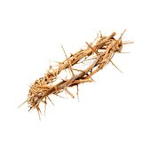 Crown of thorns. A one crown of thorns royalty free stock photos
