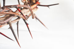 Crown of thorns. On a white background Stock Photos