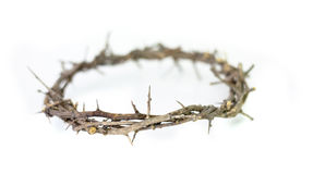 Crown of thorns. Crown of thorns on white background Royalty Free Stock Image