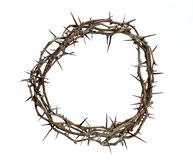 Crown of Thorns. Isolated over white background Stock Photos