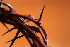 Crown of Thorns Stock Image