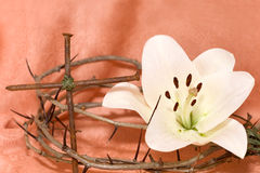 Crown of Thorns, crucifix and white Lily. On  Beige background Stock Image