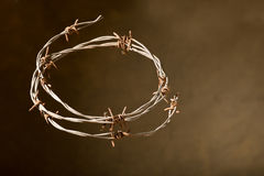 Crown of thorns Stock Images