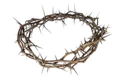 Crown of Thorns. Isolated over white background royalty free stock photos