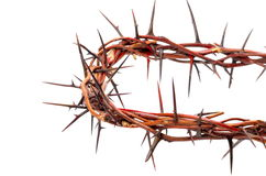Crown of thorns isolated on white background Royalty Free Stock Images