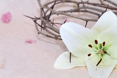 Crown of Thorns and  Lily Royalty Free Stock Images