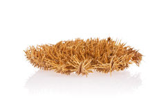 Crown of Thorns Starfish Stock Photo