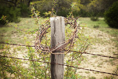 Crown of thorns on a Texas Hill Country fence post Stock Image