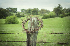 Crown of thorns on a Texas Hill Country fence post Royalty Free Stock Images