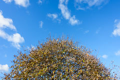 Crown of a Tree in Autumn Royalty Free Stock Image