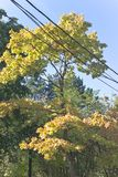 Crown of tree with electric cable over sky Stock Photo