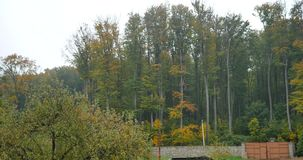 Crown of trees in autumn.  stock footage