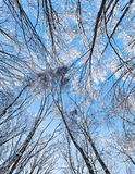 Crown of a trees covered with hoar frost Stock Photos