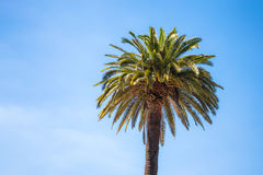 Crown of the tropical palm tree Stock Photos