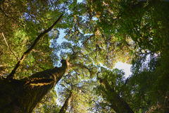 Crown of upper mountain forest Stock Photo