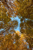 Crown of various autumn trees Royalty Free Stock Image