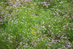 Crown vetch and a butterfly stock images