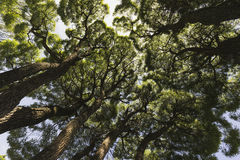 The crown of willow. Royalty Free Stock Images