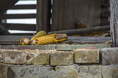 Crowned corncob Stock Photo