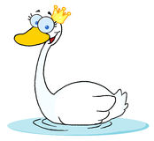 Crowned swan swimming Royalty Free Stock Image