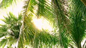Crowns of green palm trees in jungle with bright afternoon sun and rays. 4K stock video footage
