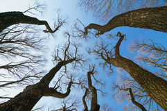 Trees against the blue sky Royalty Free Stock Photos
