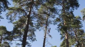 Crowns of trees in the blue sky. 1 stock video footage