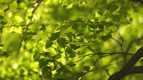 Crowns of trees. With bright afternoon stock video footage