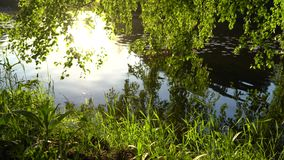 Crowns of trees with bright afternoon sun. And rays stock video footage