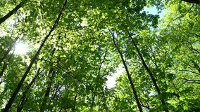 Crowns of trees with bright afternoon sun and rays. Crowns of trees with bright afternoon sun and rays stock video footage