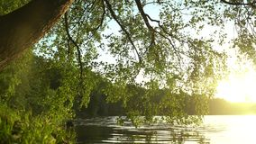 Crowns of trees with bright afternoon sun. And rays stock footage
