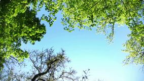 Crowns of trees with bright afternoon sun stock footage