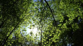 Crowns of trees with bright afternoon sun and rays. Crowns of trees with bright afternoon sun and rays stock video