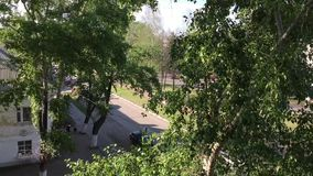 Crowns of trees in the city stock video footage