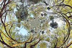 Crowns of trees with effects Royalty Free Stock Images