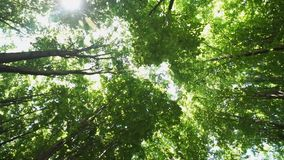 Crowns of trees in the forest with bright afternoon sun and rays. Crowns of trees with bright afternoon sun and rays stock video footage