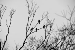 Crow inspiration royalty free stock image