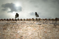 Crows above the tiles Royalty Free Stock Images