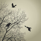 Crows Stock Photography