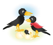 Crows and chicks. Crows chick and egg hatch Stock Image