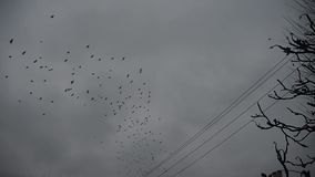 Crows circling in the cloudy sky stock video footage