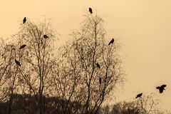 Crows at dusk. Shot in city park in BeiJing of china royalty free stock photography
