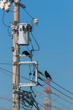 Crows on electrical wires against blue sky. Royalty Free Stock Image