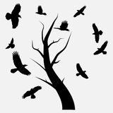 Crows. Fly round a tree Vector Illustration