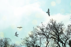 Crows flying above. Black birds flying above tree branches with a blue sky with clouds and white and yellow bokeh halos Stock Photography