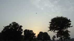 Crows Flying Away stock video footage