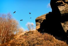 Crows flying over rocky moorland outcrop in bright sunlight royalty free stock photo