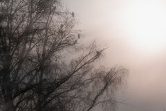 Crows in fog Royalty Free Stock Photo